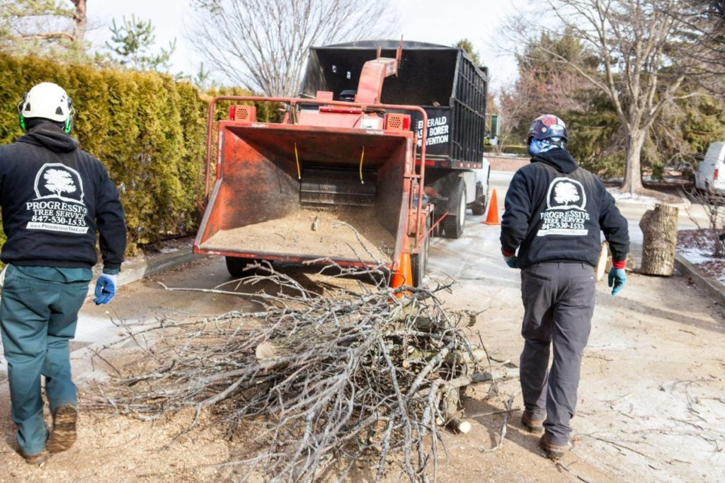 Commercial-Tree-Services-Henderson's Best Tree Care Services-We Offer Tree Trimming Services, Tree Removal, Tree Pruning, Tree Cutting, Residential and Commercial Tree Trimming Services, Storm Damage, Emergency Tree Removal, Land Clearing, Tree Companies, Tree Care Service, Stump Grinding, and we're the Best Tree Trimming Company Near You Guaranteed!