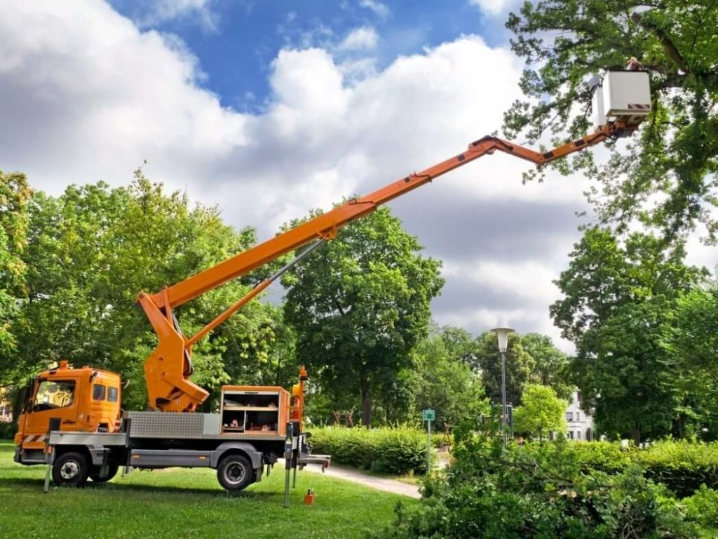 Contact Us-Henderson's Best Tree Care Services-We Offer Tree Trimming Services, Tree Removal, Tree Pruning, Tree Cutting, Residential and Commercial Tree Trimming Services, Storm Damage, Emergency Tree Removal, Land Clearing, Tree Companies, Tree Care Service, Stump Grinding, and we're the Best Tree Trimming Company Near You Guaranteed!