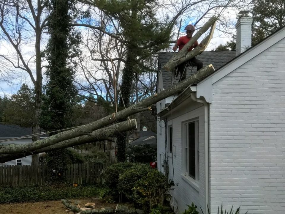 Emergency-Tree-Removal-Henderson's Best Tree Care Services-We Offer Tree Trimming Services, Tree Removal, Tree Pruning, Tree Cutting, Residential and Commercial Tree Trimming Services, Storm Damage, Emergency Tree Removal, Land Clearing, Tree Companies, Tree Care Service, Stump Grinding, and we're the Best Tree Trimming Company Near You Guaranteed!