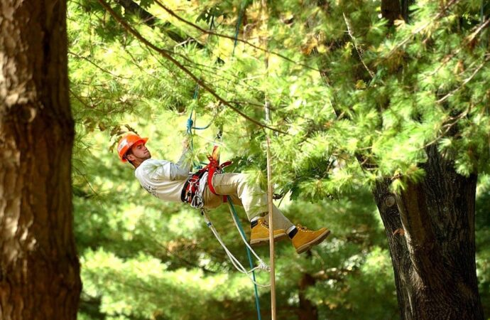 Henderson's Best Tree Care Services Home Page Image-We Offer Tree Trimming Services, Tree Removal, Tree Pruning, Tree Cutting, Residential and Commercial Tree Trimming Services, Storm Damage, Emergency Tree Removal, Land Clearing, Tree Companies, Tree Care Service, Stump Grinding, and we're the Best Tree Trimming Company Near You Guaranteed!