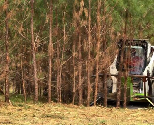 Land-Clearing-Henderson's Best Tree Care Services-We Offer Tree Trimming Services, Tree Removal, Tree Pruning, Tree Cutting, Residential and Commercial Tree Trimming Services, Storm Damage, Emergency Tree Removal, Land Clearing, Tree Companies, Tree Care Service, Stump Grinding, and we're the Best Tree Trimming Company Near You Guaranteed!