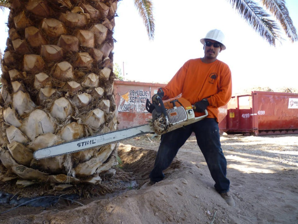 Palm-Tree-Removal-Henderson's Best Tree Care Services-We Offer Tree Trimming Services, Tree Removal, Tree Pruning, Tree Cutting, Residential and Commercial Tree Trimming Services, Storm Damage, Emergency Tree Removal, Land Clearing, Tree Companies, Tree Care Service, Stump Grinding, and we're the Best Tree Trimming Company Near You Guaranteed!