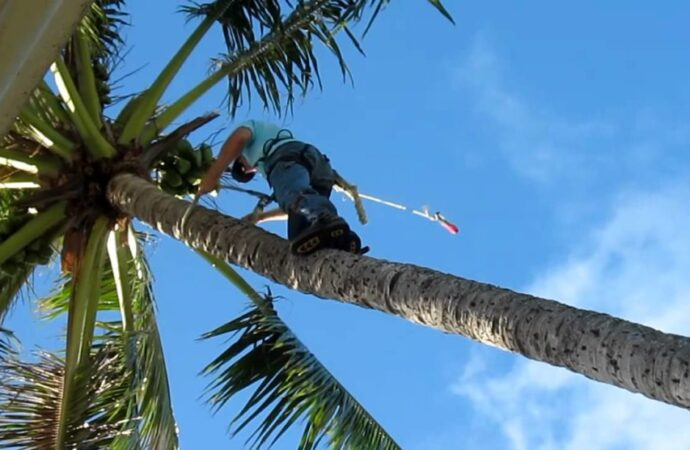 Palm Tree Trimming and Removal-Henderson's Best Tree Care Services-We Offer Tree Trimming Services, Tree Removal, Tree Pruning, Tree Cutting, Residential and Commercial Tree Trimming Services, Storm Damage, Emergency Tree Removal, Land Clearing, Tree Companies, Tree Care Service, Stump Grinding, and we're the Best Tree Trimming Company Near You Guaranteed!