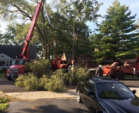Residential-Tree-Services-Henderson's Best Tree Care Services-We Offer Tree Trimming Services, Tree Removal, Tree Pruning, Tree Cutting, Residential and Commercial Tree Trimming Services, Storm Damage, Emergency Tree Removal, Land Clearing, Tree Companies, Tree Care Service, Stump Grinding, and we're the Best Tree Trimming Company Near You Guaranteed!