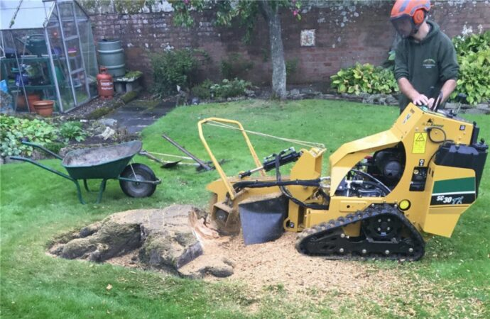 Stump-Removal-Henderson's Best Tree Care Services-We Offer Tree Trimming Services, Tree Removal, Tree Pruning, Tree Cutting, Residential and Commercial Tree Trimming Services, Storm Damage, Emergency Tree Removal, Land Clearing, Tree Companies, Tree Care Service, Stump Grinding, and we're the Best Tree Trimming Company Near You Guaranteed!