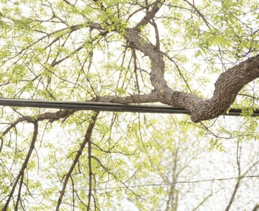 Tree Bracing and Cabling-Henderson's Best Tree Care Services-We Offer Tree Trimming Services, Tree Removal, Tree Pruning, Tree Cutting, Residential and Commercial Tree Trimming Services, Storm Damage, Emergency Tree Removal, Land Clearing, Tree Companies, Tree Care Service, Stump Grinding, and we're the Best Tree Trimming Company Near You Guaranteed!