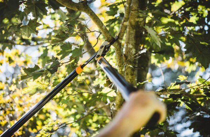 Tree-Pruning-Henderson's Best Tree Care Services-We Offer Tree Trimming Services, Tree Removal, Tree Pruning, Tree Cutting, Residential and Commercial Tree Trimming Services, Storm Damage, Emergency Tree Removal, Land Clearing, Tree Companies, Tree Care Service, Stump Grinding, and we're the Best Tree Trimming Company Near You Guaranteed!