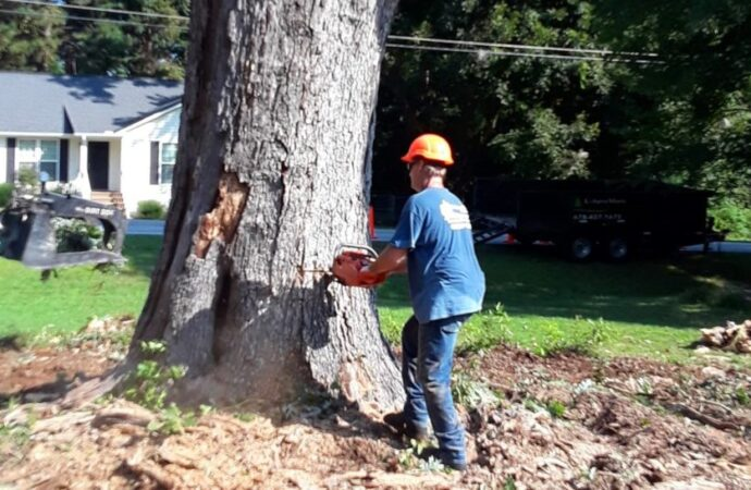 Tree-Removal-Henderson's Best Tree Care Services-We Offer Tree Trimming Services, Tree Removal, Tree Pruning, Tree Cutting, Residential and Commercial Tree Trimming Services, Storm Damage, Emergency Tree Removal, Land Clearing, Tree Companies, Tree Care Service, Stump Grinding, and we're the Best Tree Trimming Company Near You Guaranteed!