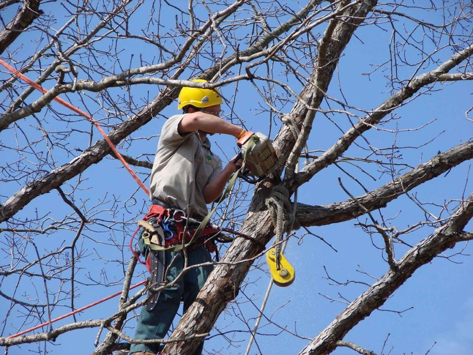 Tree-Trimming-Henderson's Best Tree Care Services-We Offer Tree Trimming Services, Tree Removal, Tree Pruning, Tree Cutting, Residential and Commercial Tree Trimming Services, Storm Damage, Emergency Tree Removal, Land Clearing, Tree Companies, Tree Care Service, Stump Grinding, and we're the Best Tree Trimming Company Near You Guaranteed!