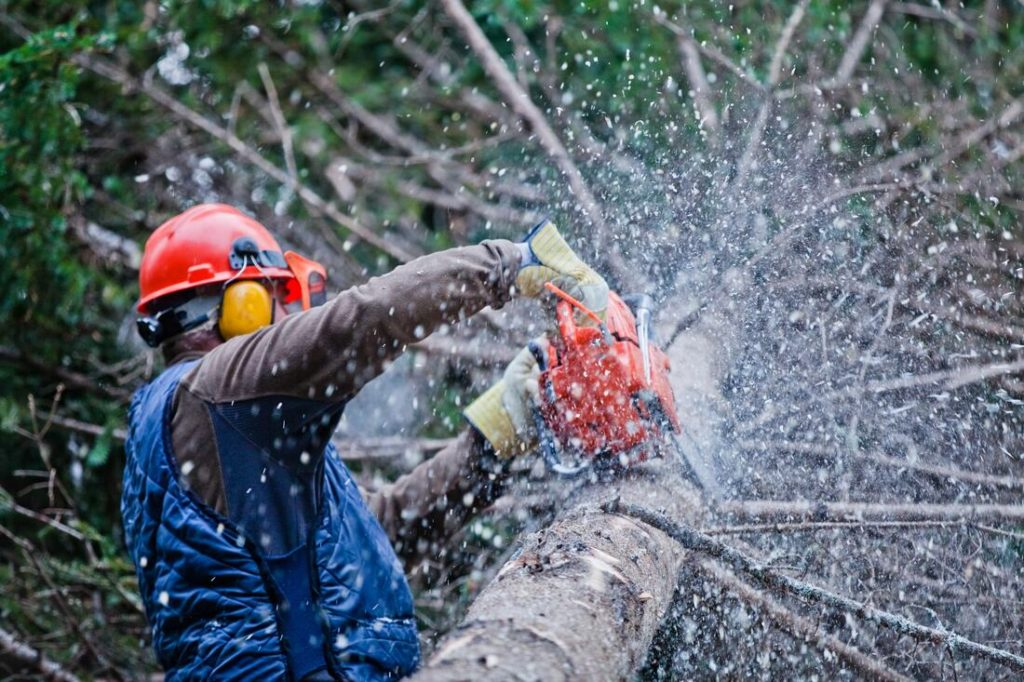 Boulder City-Henderson's Best Tree Care Services-We Offer Tree Trimming Services, Tree Removal, Tree Pruning, Tree Cutting, Residential and Commercial Tree Trimming Services, Storm Damage, Emergency Tree Removal, Land Clearing, Tree Companies, Tree Care Service, Stump Grinding, and we're the Best Tree Trimming Company Near You Guaranteed!