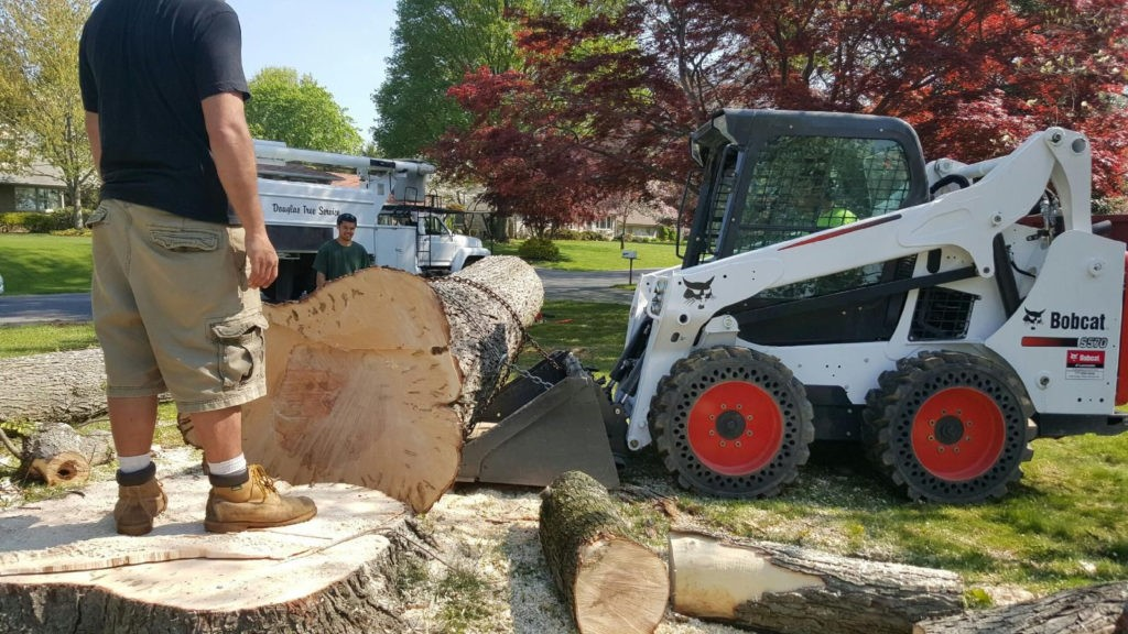 Enterprise-Henderson's Best Tree Care Services-We Offer Tree Trimming Services, Tree Removal, Tree Pruning, Tree Cutting, Residential and Commercial Tree Trimming Services, Storm Damage, Emergency Tree Removal, Land Clearing, Tree Companies, Tree Care Service, Stump Grinding, and we're the Best Tree Trimming Company Near You Guaranteed!