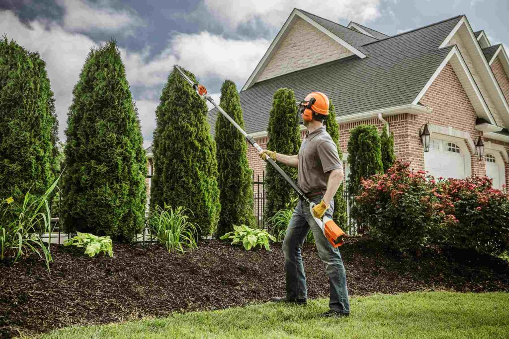 Paradise-Henderson's Best Tree Care Services-We Offer Tree Trimming Services, Tree Removal, Tree Pruning, Tree Cutting, Residential and Commercial Tree Trimming Services, Storm Damage, Emergency Tree Removal, Land Clearing, Tree Companies, Tree Care Service, Stump Grinding, and we're the Best Tree Trimming Company Near You Guaranteed!