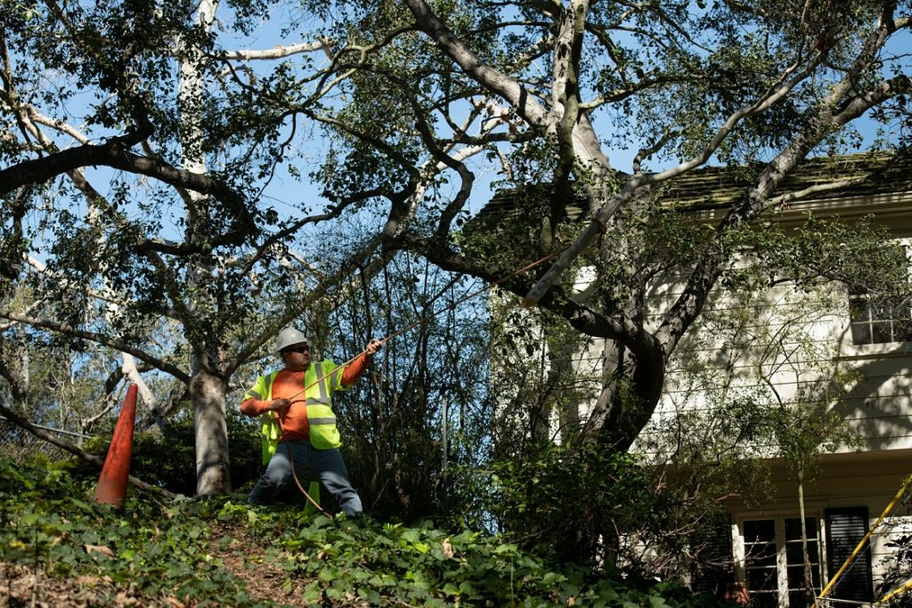 Sloan-Henderson's Best Tree Care Services-We Offer Tree Trimming Services, Tree Removal, Tree Pruning, Tree Cutting, Residential and Commercial Tree Trimming Services, Storm Damage, Emergency Tree Removal, Land Clearing, Tree Companies, Tree Care Service, Stump Grinding, and we're the Best Tree Trimming Company Near You Guaranteed!